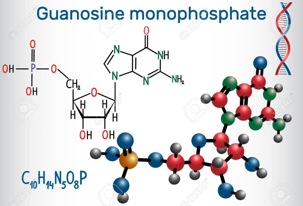 medium resolution of guanosine monophosphate gmp molecule it is an ester of phosphoric acid with the