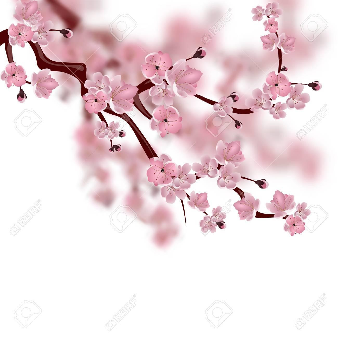 cerisier japonais une branche de fleur de sakura rose isole sur fond blanc avec des nuances illustration