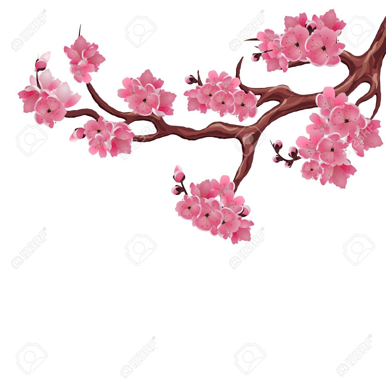 cerise japonaise sakura branches luxuriantes fleurs de cerisier rose fonce isole sur fond blanc illustration vectorielle