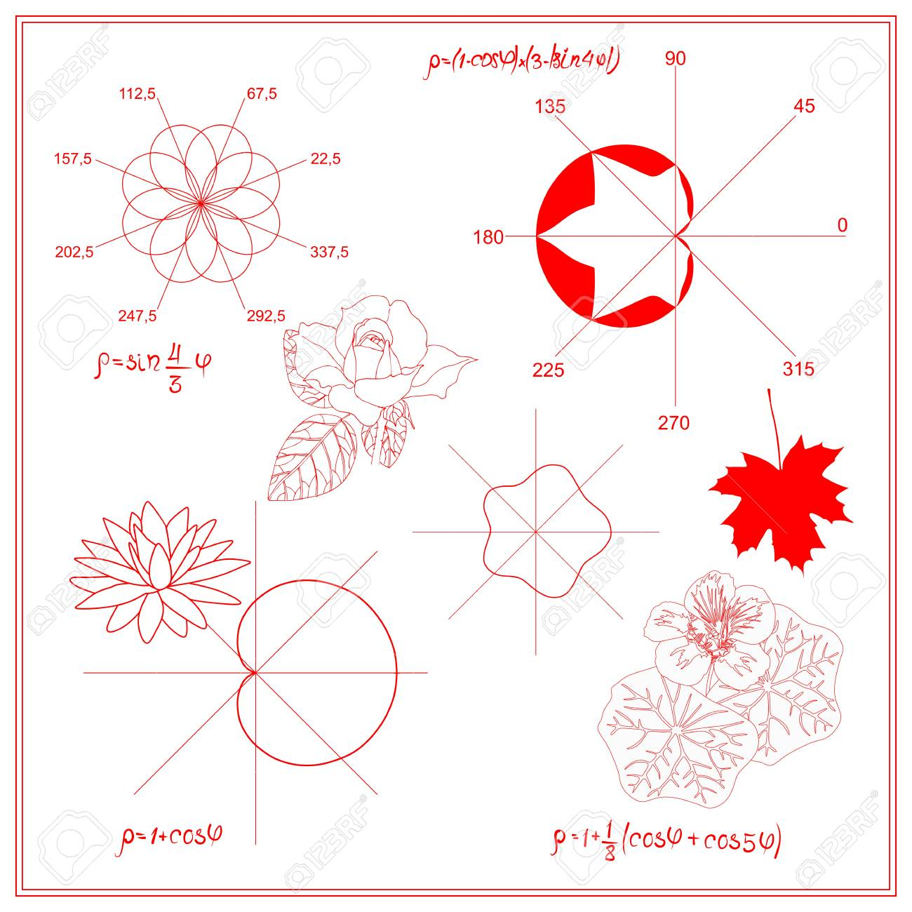 hight resolution of trigonometric functions and algebraic graphs of water lily sheet stock vector 99438990