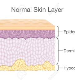 layer of healthy human skin in vector style and components information illustration about medical diagram [ 1300 x 900 Pixel ]