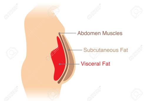 small resolution of location of visceral fat stored within the abdominal cavity illustration about medical diagram stock