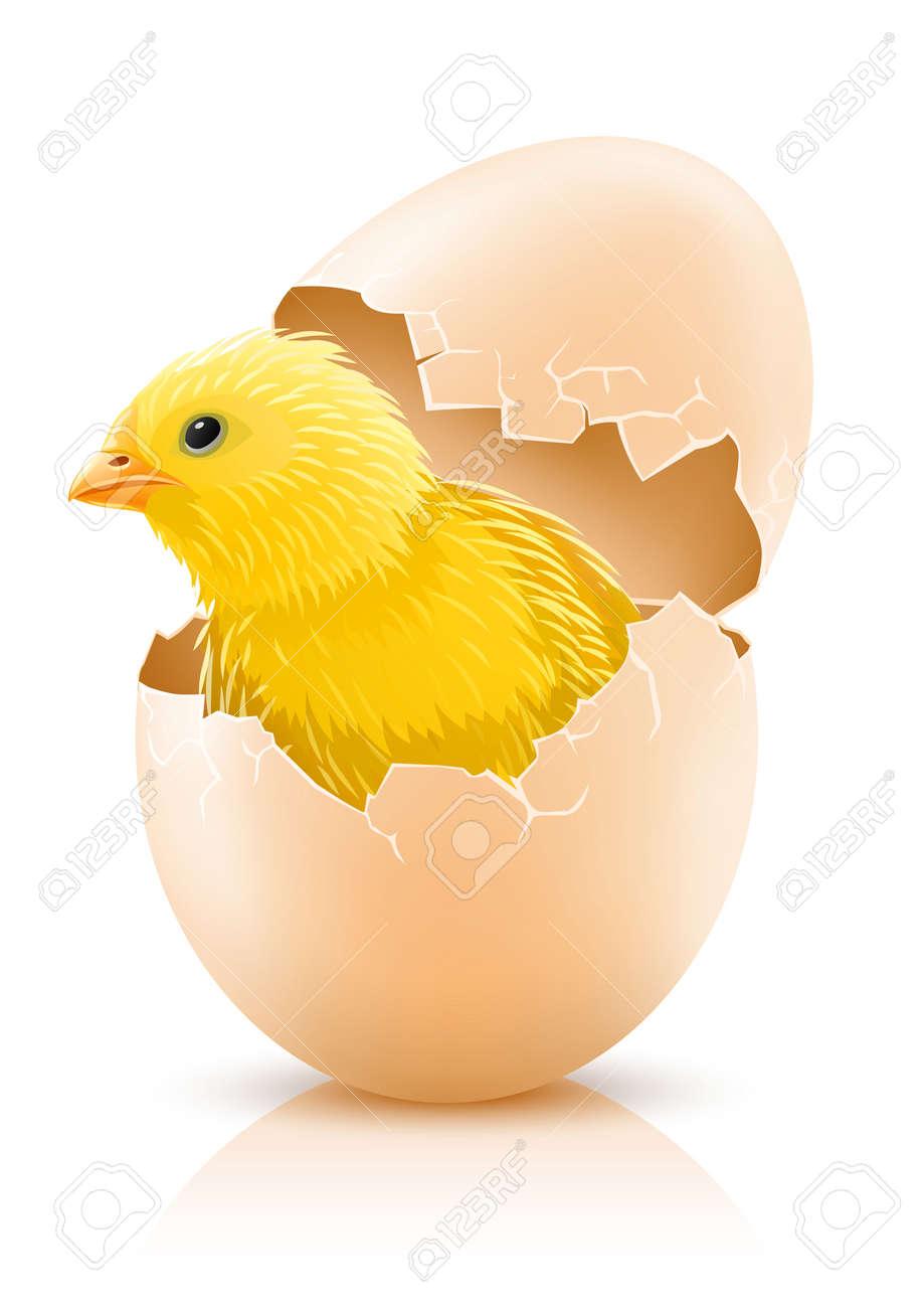 cracked hen s egg