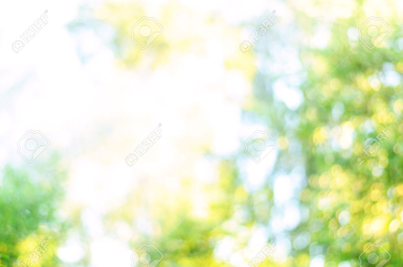 blurred background of nature