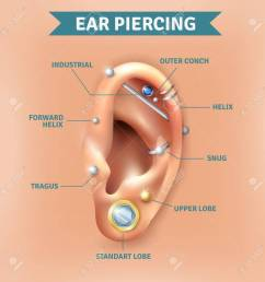 top different types of ear piercing trendy positions picture infographic elements natural background poster vector illustration [ 1299 x 1300 Pixel ]