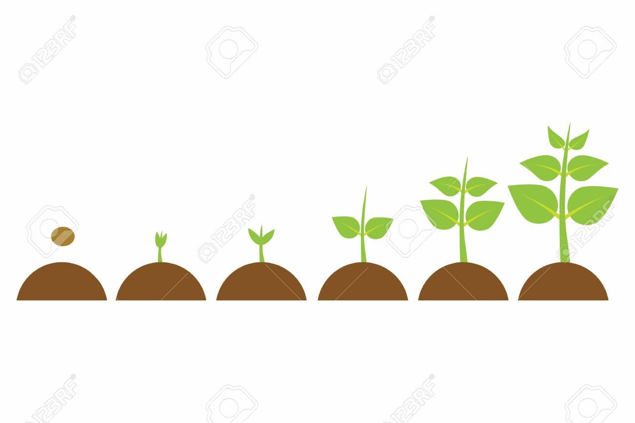 plantes qui poussent dans le pot de petite a grande ensemble d illustrations avec des phases de croissance des plantes la culture des plantes dans