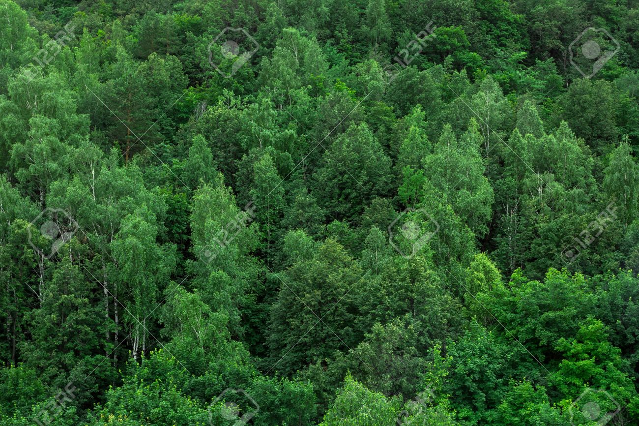green forest trees texture