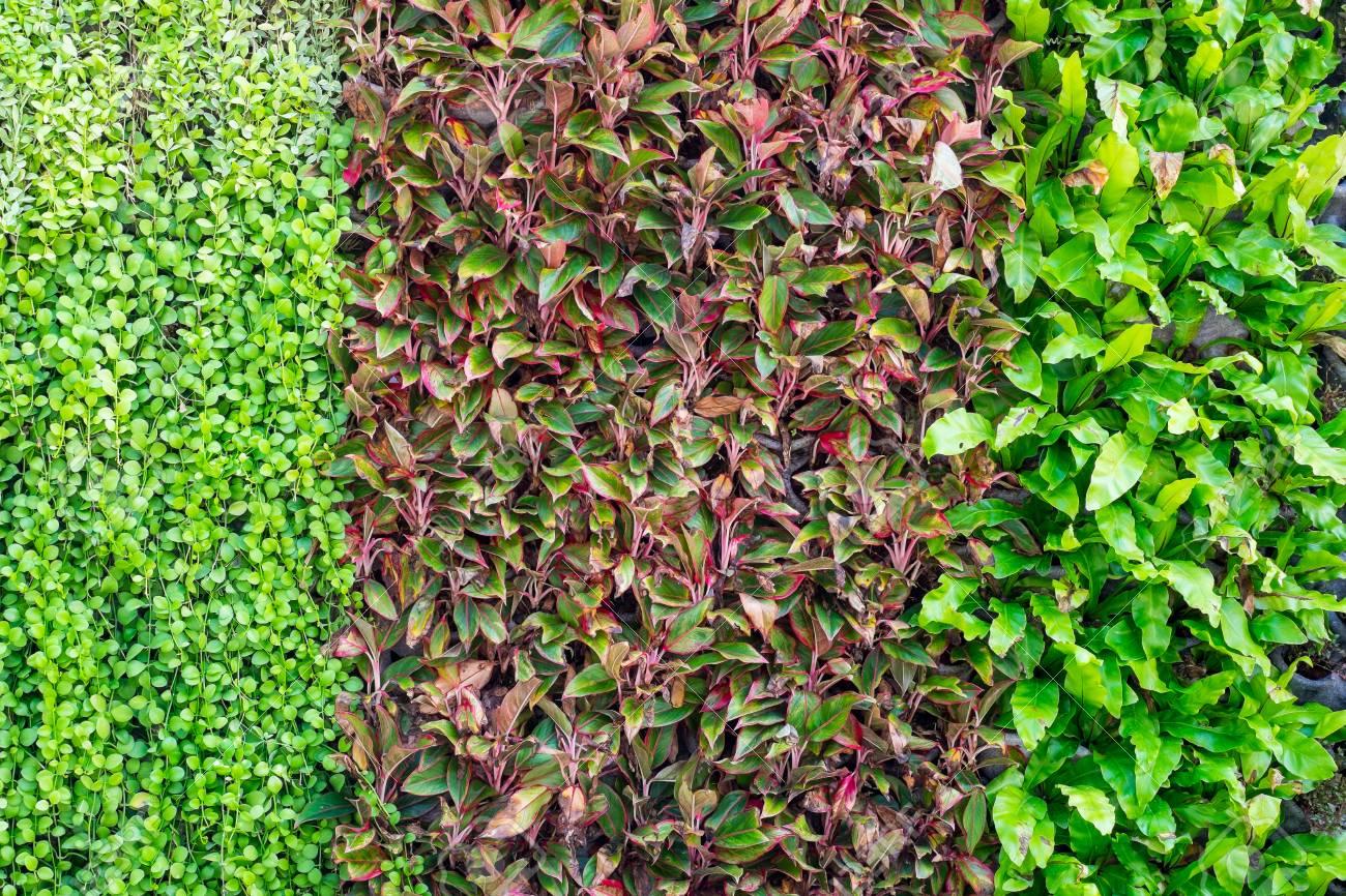 trois types de plantes sur le mur comme arriere plan decoration de jardin et exterieur