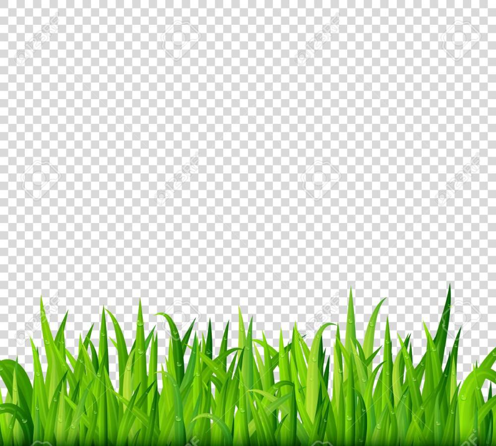 medium resolution of green grass border on transparent background vector stock vector 68809653