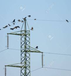 many crow birds flying on the electric wires stock photo picture electrical wires and birds [ 1300 x 975 Pixel ]