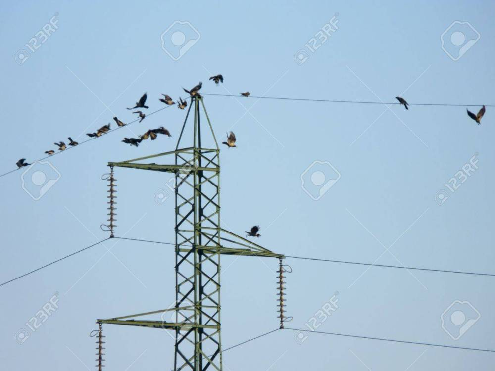 medium resolution of many crow birds flying on the electric wires stock photo picture electrical wires and birds