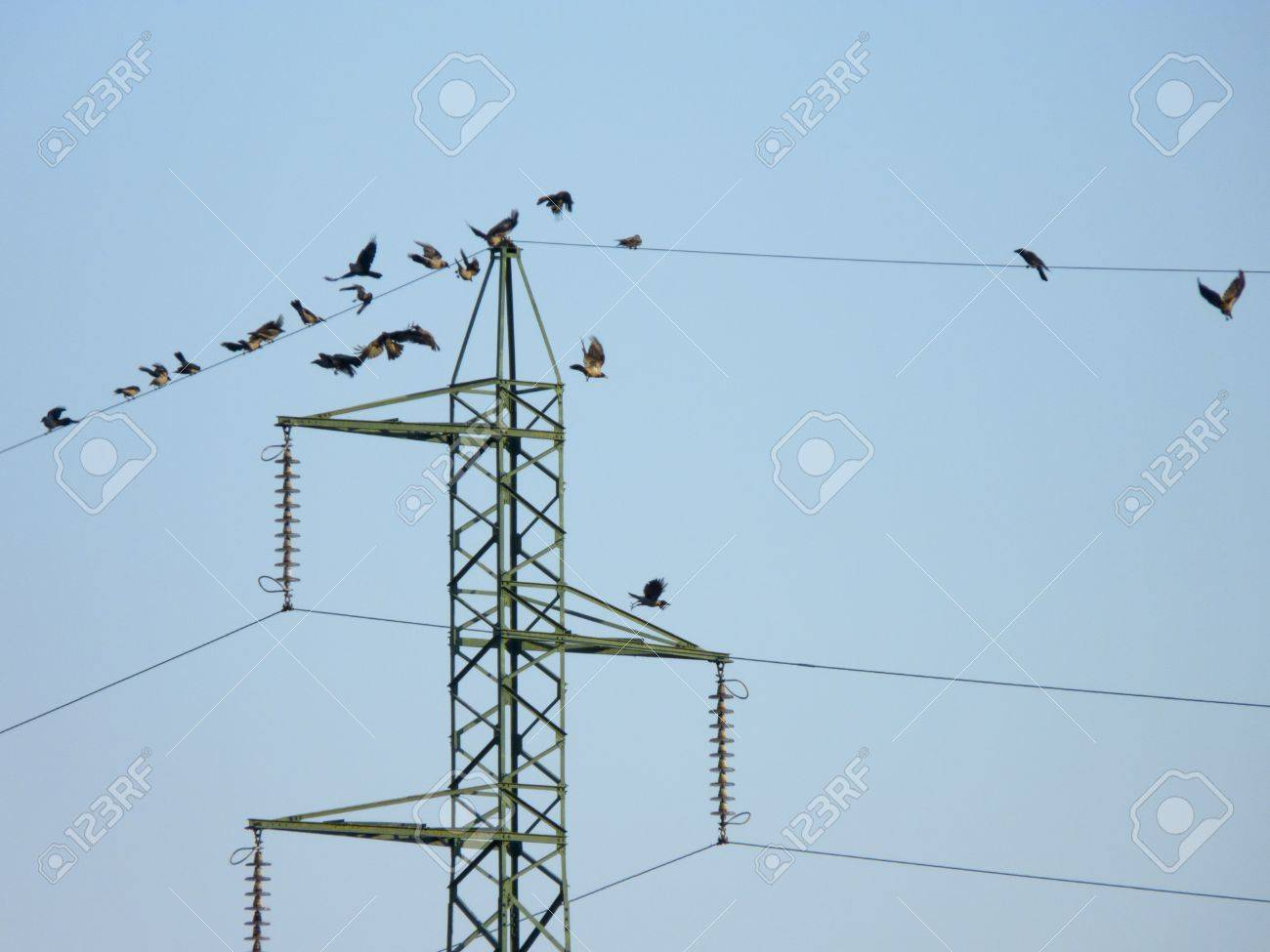 hight resolution of many crow birds flying on the electric wires stock photo picture electrical wires and birds