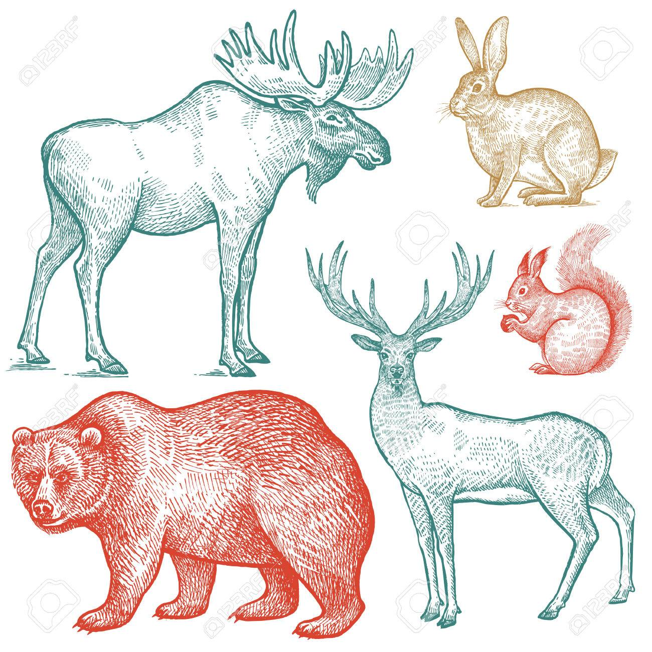 Hello, i soon wish to manually animate (framebyframe) a 3d animation which is to loop. Forest Animals Set Hand Drawing Sketch Color Ink Isolated On White Background Vector Art Illustration Vintage Engraving Style Nature Objects Moose Deer Bear Rabbit Squirrel Wildlife Mammals Royalty Free Cliparts Vectors And