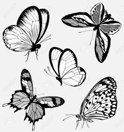 set black white butterflies of a tattoo stock vector 9144603 [ 1227 x 1300 Pixel ]