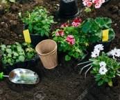 planting a summer garden
