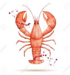 watercolor lobster fresh organic seafood vector illustration stock vector 39085504 [ 1300 x 1300 Pixel ]