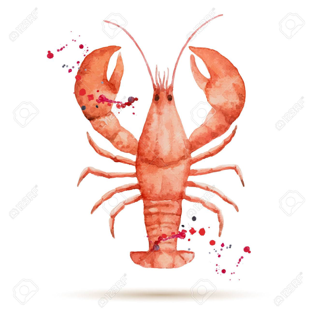 hight resolution of watercolor lobster fresh organic seafood vector illustration stock vector 39085504
