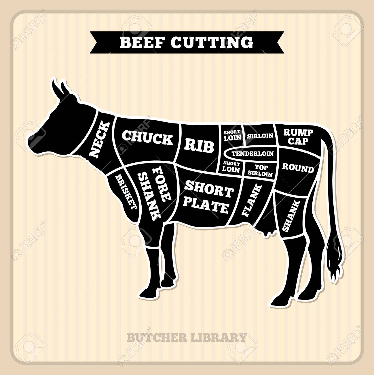 dairy cow parts diagram prs se custom 22 wiring meat cut free cuts vector image 1490900 hight resolution of beef butcher placard with section