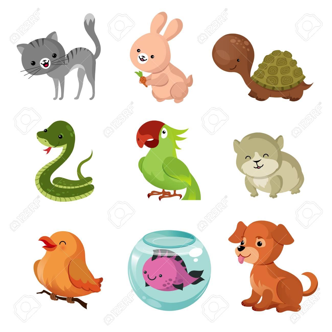 pets domestic animals vector
