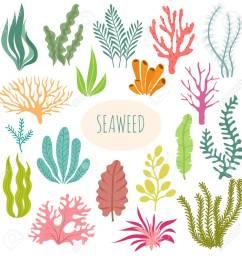 seaweeds aquarium plants underwater planting vector seaweed silhouette isolated set illustration of [ 1299 x 1300 Pixel ]
