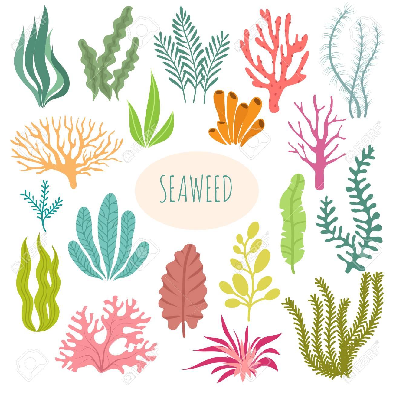hight resolution of seaweeds aquarium plants underwater planting vector seaweed silhouette isolated set illustration of