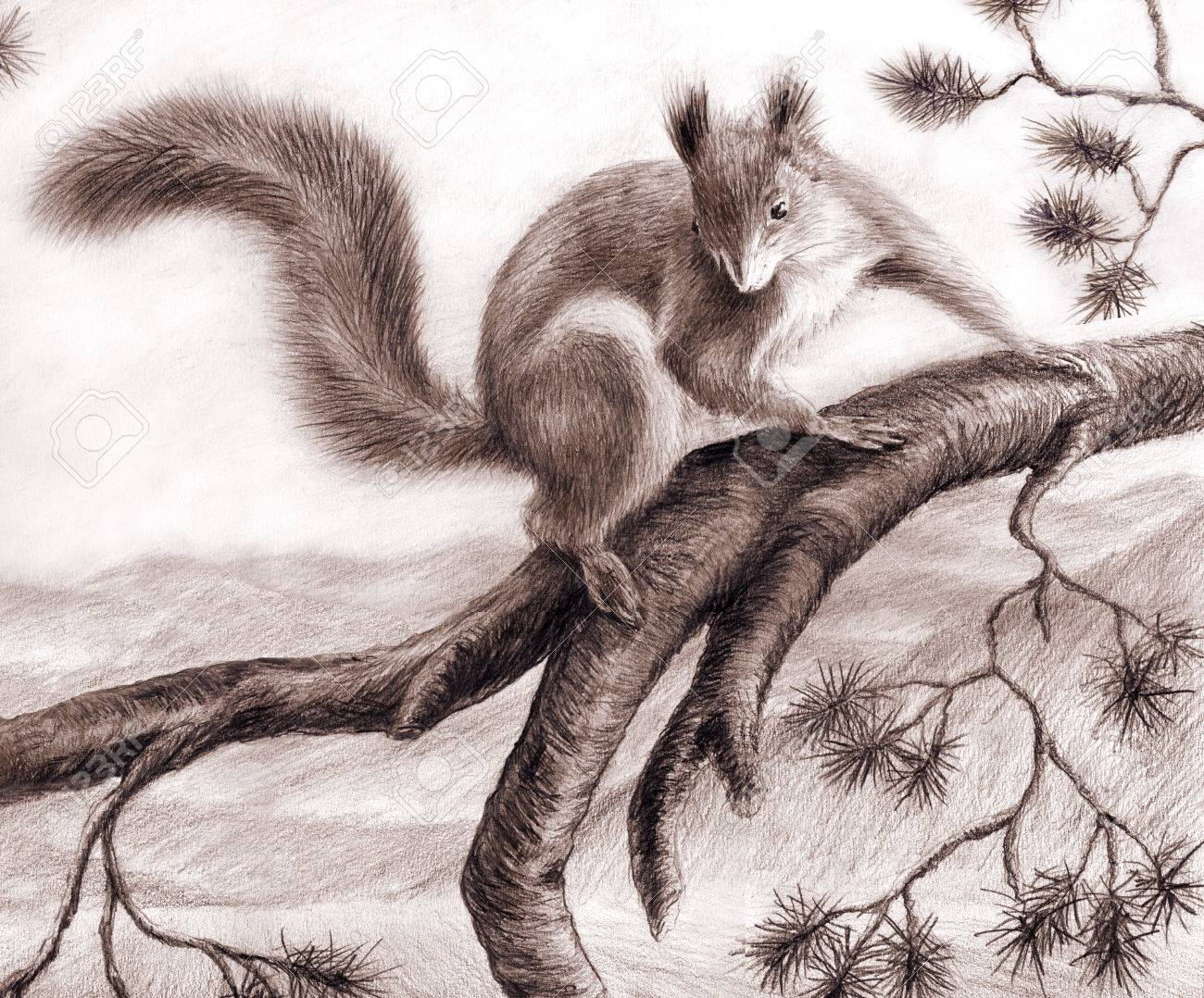 pencil drawing squirrel on