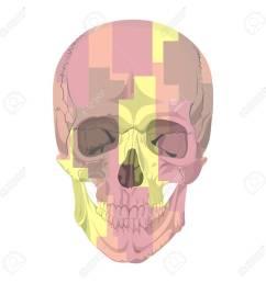 human skull bones skeleton dead anatomy illustration camouflage stock vector 57643287 [ 1300 x 1300 Pixel ]