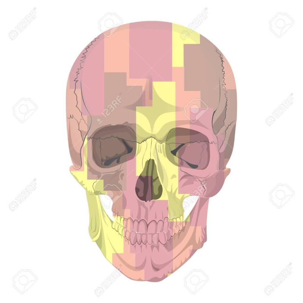 medium resolution of human skull bones skeleton dead anatomy illustration camouflage stock vector 57643287