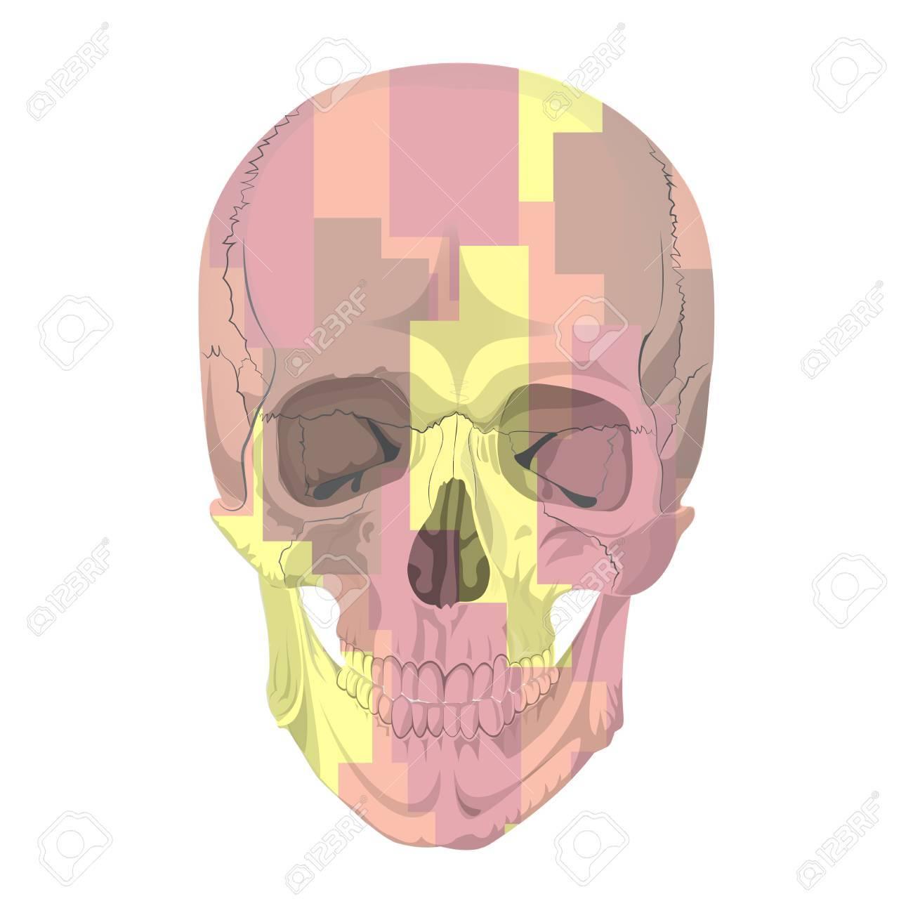 hight resolution of human skull bones skeleton dead anatomy illustration camouflage stock vector 57643287