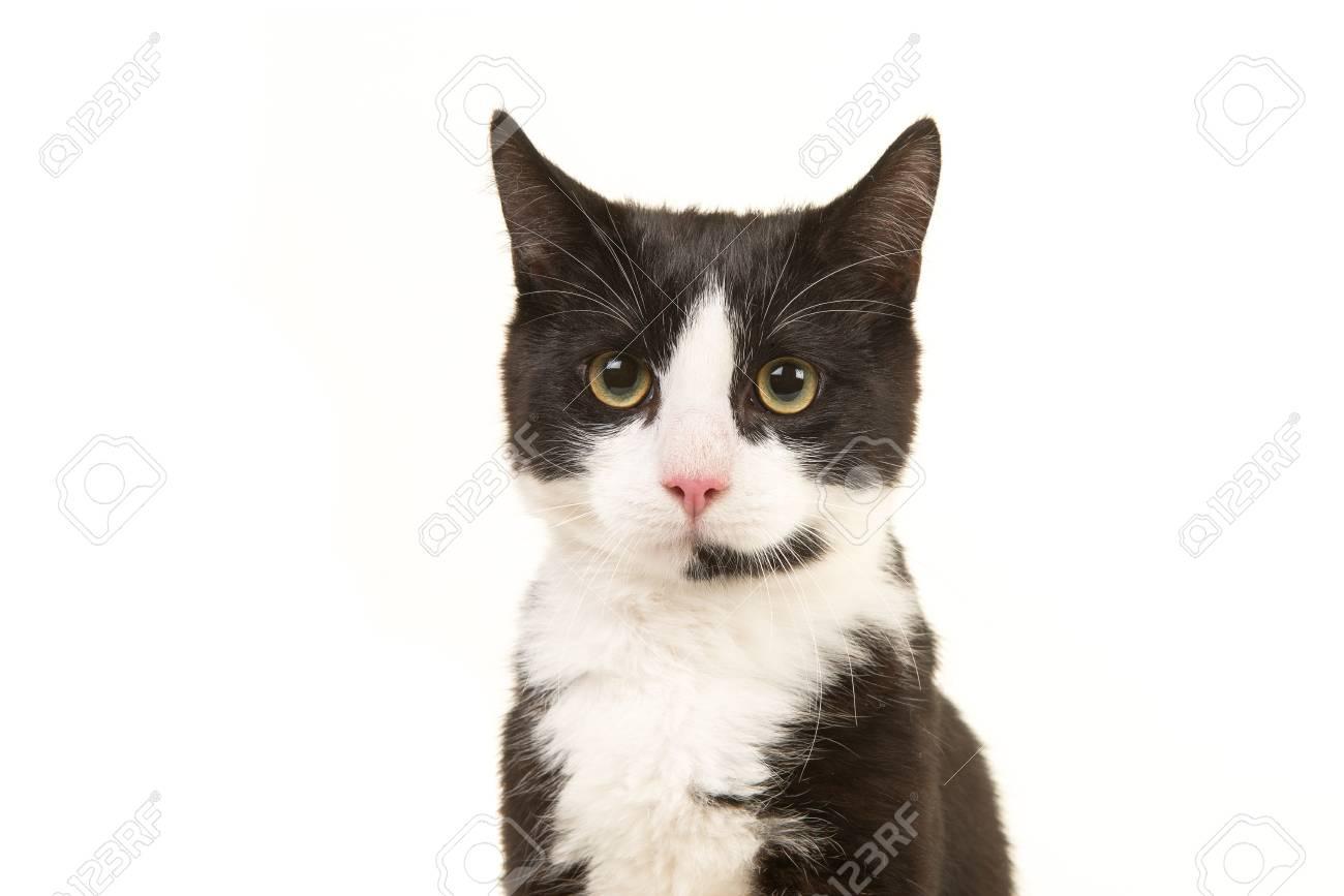 portrait de chat noir et blanc face a la camera isole sur fond blanc banque d images et photos libres de droits image 81410225