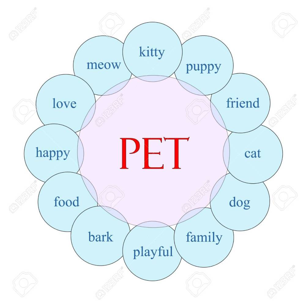 medium resolution of pet concept circular diagram in pink and blue with great terms such as kitty puppy