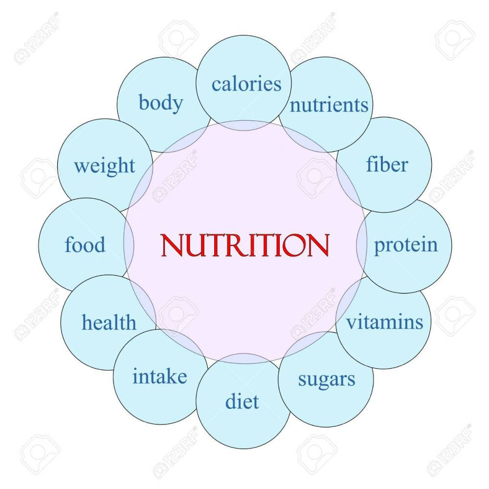 medium resolution of nutrition concept circular diagram in pink and blue with great diagram of animal nutrition diagram of nutrition