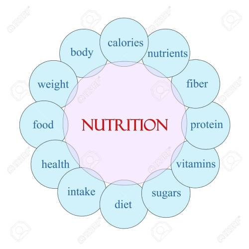 small resolution of nutrition concept circular diagram in pink and blue with great diagram of animal nutrition diagram of nutrition