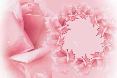 Floral Pink white Beautiful Background Flower Composition Stock Photo Picture And Royalty Free Image Image 90673449