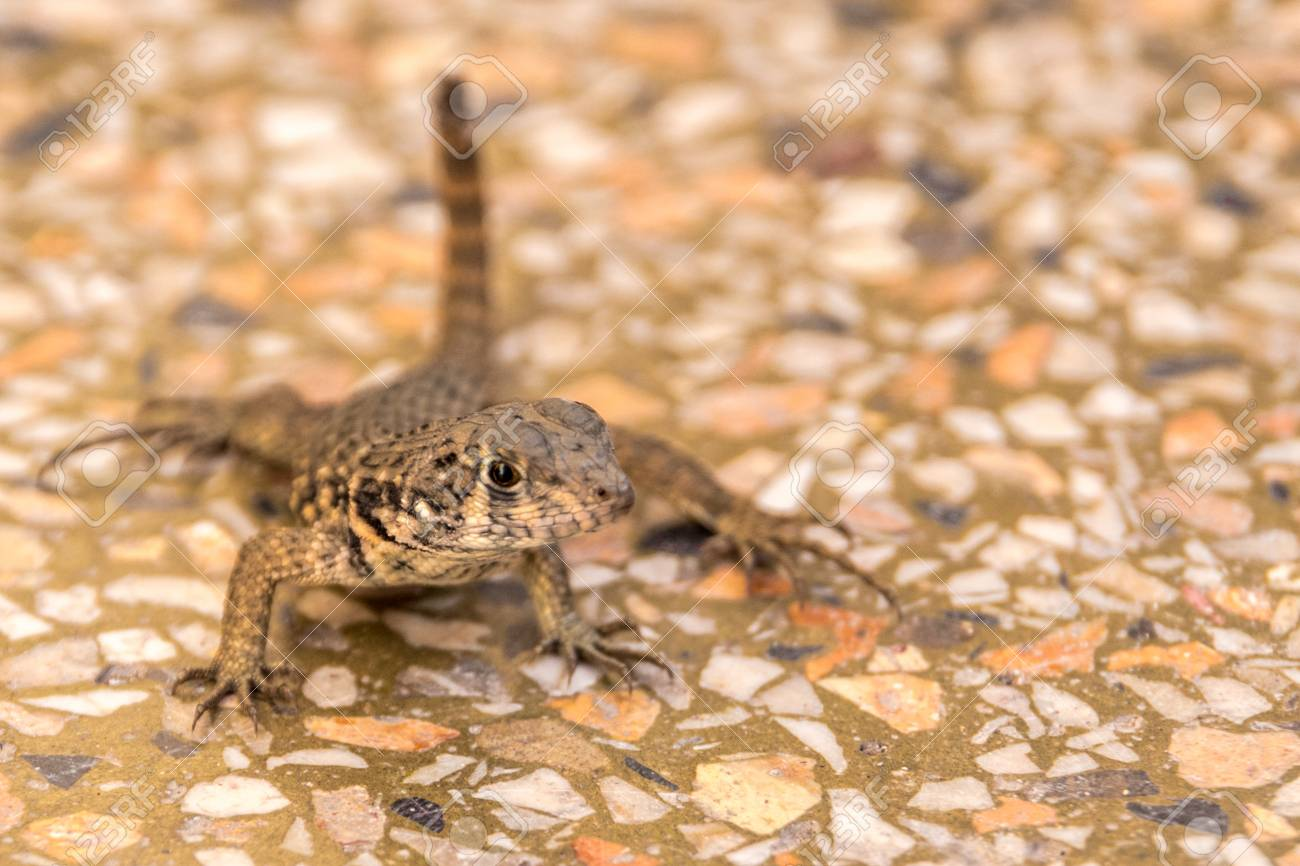 blurred lizard standing on
