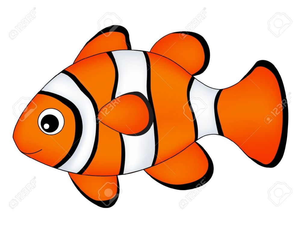 medium resolution of reef fish clown fish fish isolated on white background stock vector 62403510