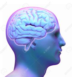 brain diagram in human head on white background stock photo 42047655 [ 1300 x 1300 Pixel ]