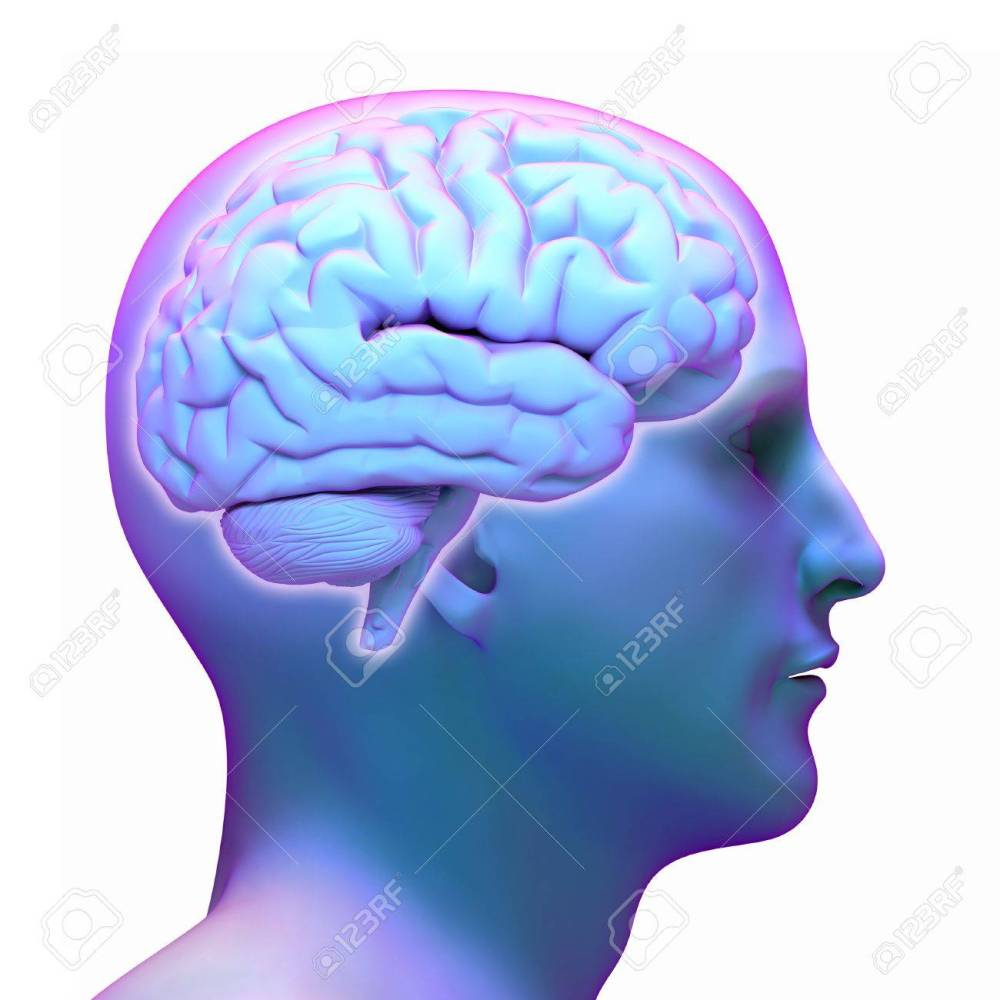 medium resolution of brain diagram in human head on white background stock photo 42047655