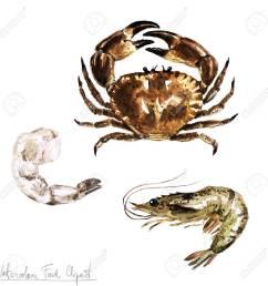 stock photo watercolor food clipart crab and shrimp [ 1300 x 1300 Pixel ]