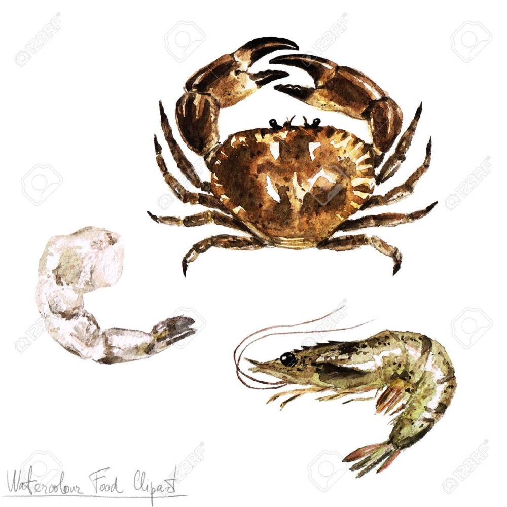 medium resolution of stock photo watercolor food clipart crab and shrimp