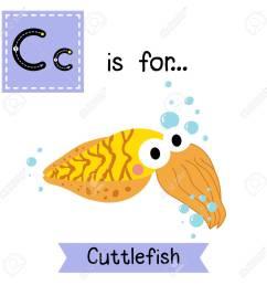 c letter tracing yellow cuttlefish cute children zoo alphabet flash card funny cartoon [ 1300 x 1300 Pixel ]