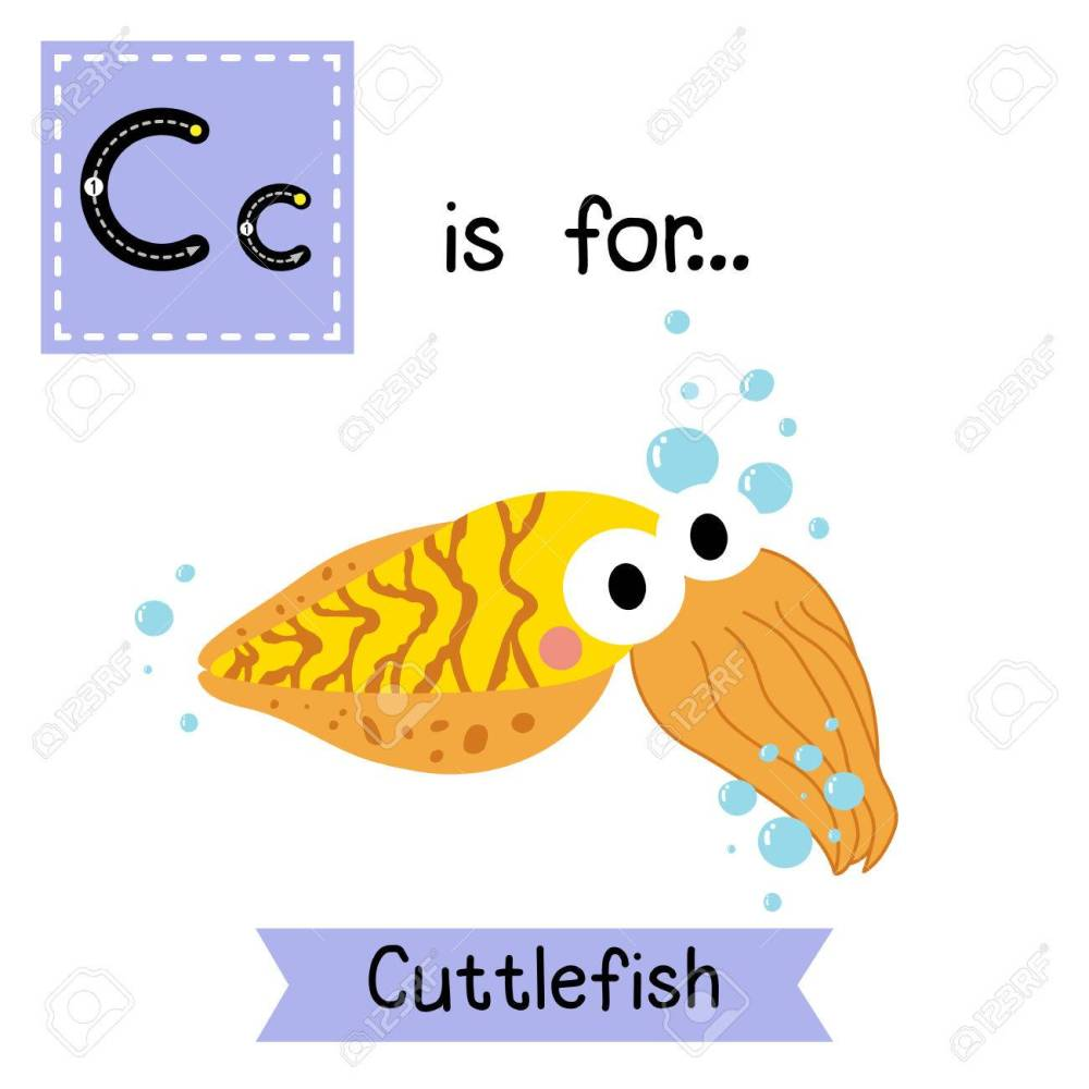 medium resolution of c letter tracing yellow cuttlefish cute children zoo alphabet flash card funny cartoon