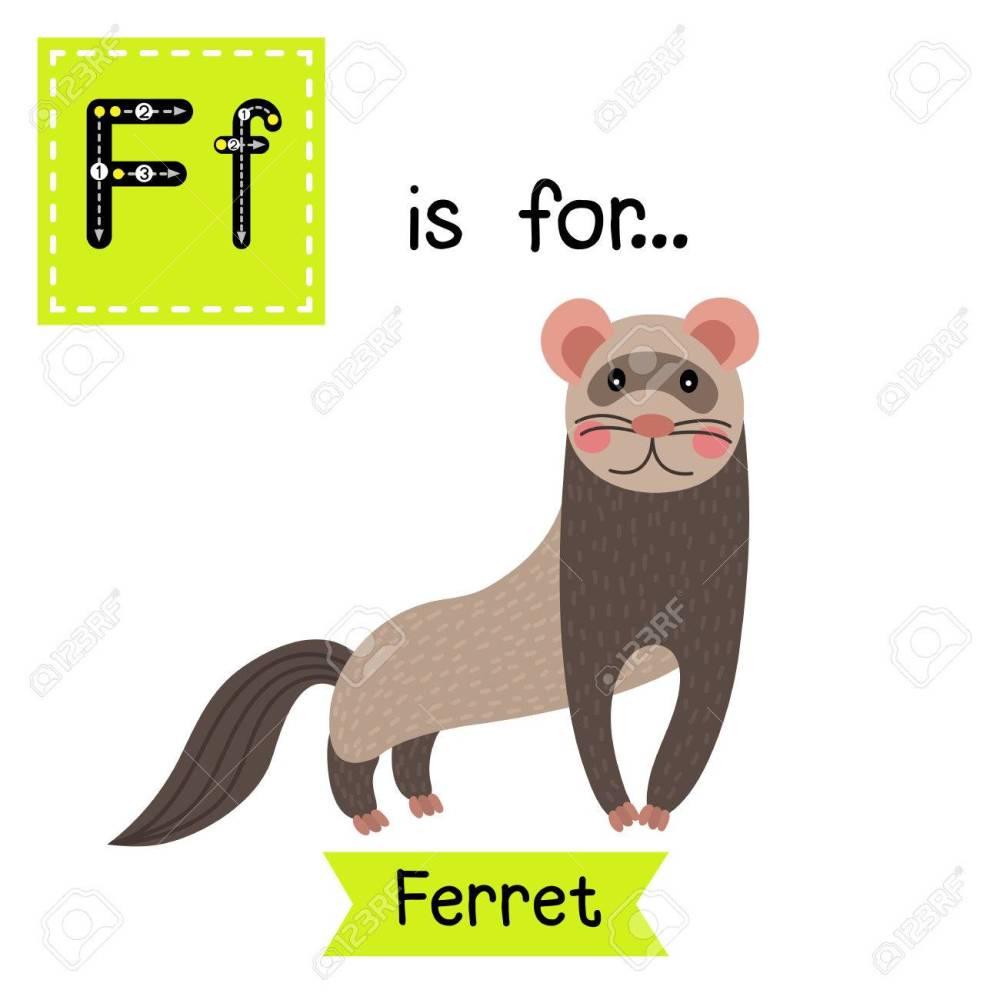 medium resolution of standing ferret cute children zoo alphabet flash card funny cartoon