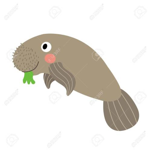 small resolution of manatee animal cartoon character isolated on white background illustration stock vector 65375061
