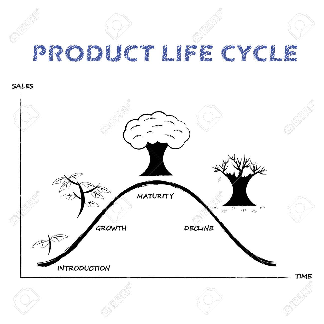 hight resolution of black white product life cycle diagram is drew by pencil or charcoal on white background