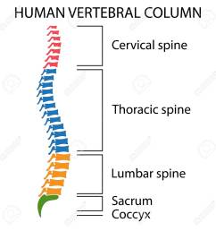 diagram of a human spine with names of all sections of the vertebrae stock vector [ 1299 x 1300 Pixel ]