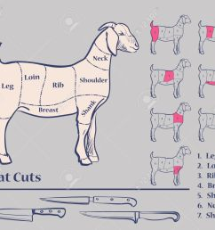 goat meat cuts diagram excellent vector illustration eps 10 stock vector 46093281 [ 1300 x 1083 Pixel ]