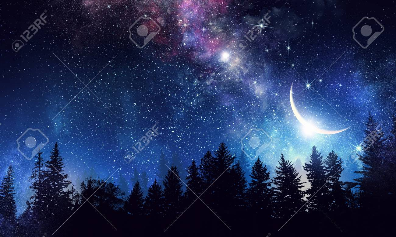 night forest and starry