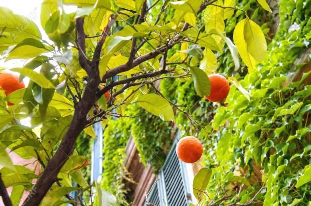 Frutos De Color Naranja En Un árbol Cerca De La Casa Fotos ...