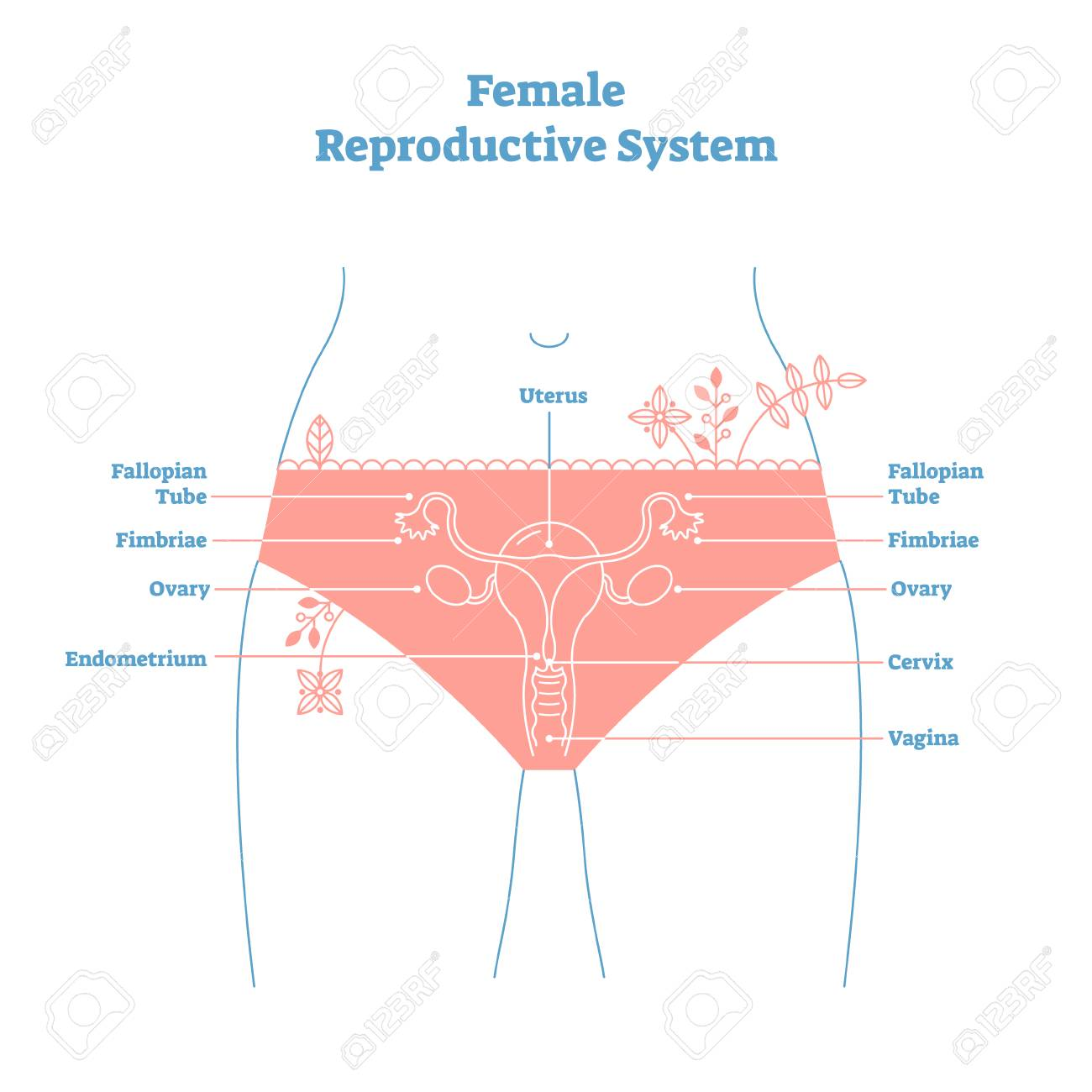 hight resolution of artistic style female reproductive system vector illustration educational poster health and medicine labeled diagram